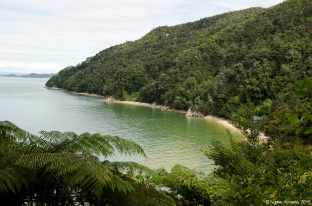 Beach spot, Abel Tasman National Park