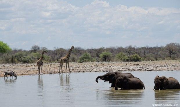 Waterhole, Etosha National Park, Namibia
