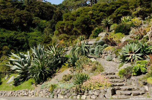 Botanical Gardens, Wellington