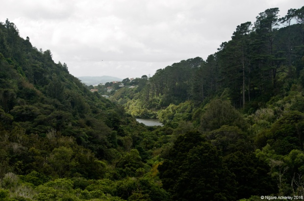 Landscape of Zealandia