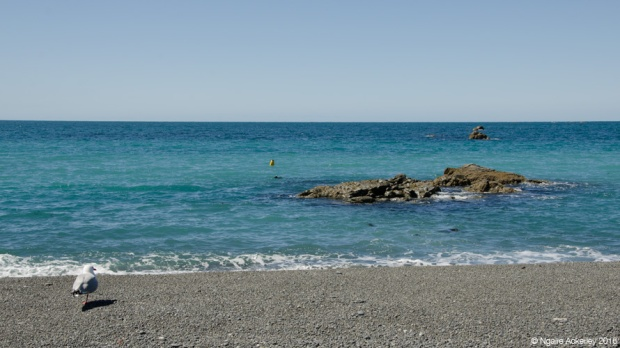 A little bird waits... Kaikoura, NZ