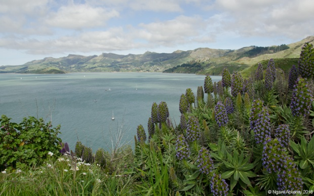 View on the way from Lyttelton to Akaroa