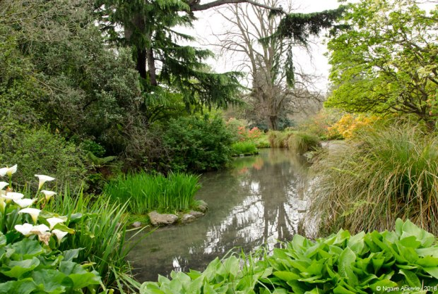 Christchurch Botanic Gardens ponds
