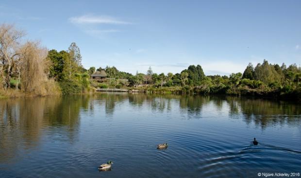 Auckland Botanic Gardens on a sunny Autumn day