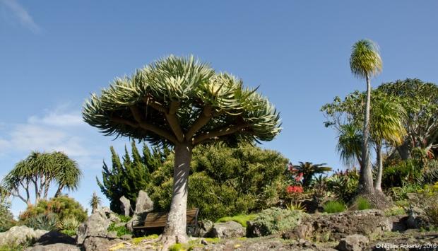 Rock Gardens at Auckland Botanic Gardens