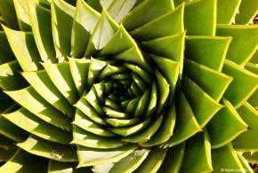 Succulent at Auckland Botanic Gardens