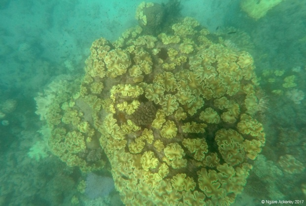 Coral in the Great Barrier Reef, Upolu Reef