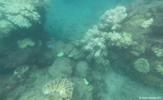 Coral, Great Barrier Reef