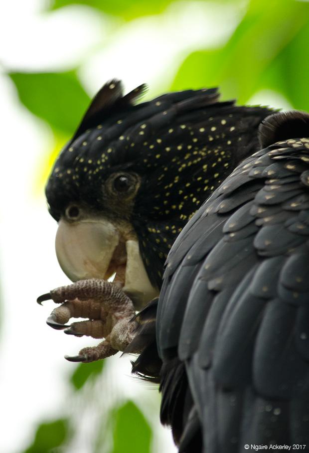 Parrot, Wildlife Habitat