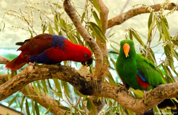 Parrots in the cafe