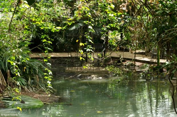Rainforest, Wildlife Habitat