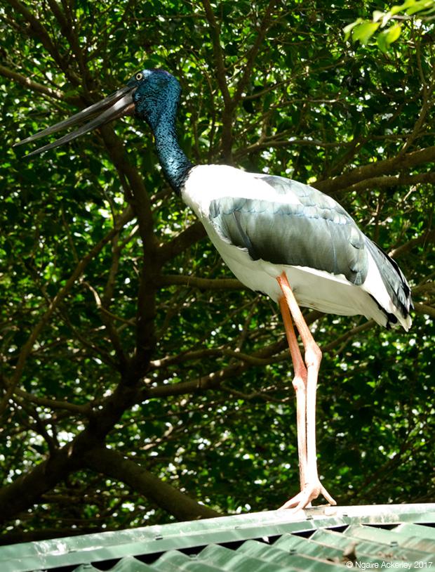 Stork on roof, Wildlife Habitat