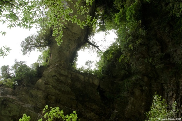 Looking up at the Oparara Arches