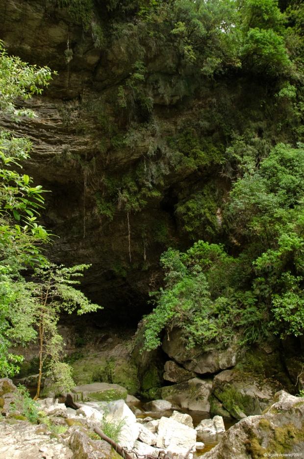 Oparara Arches area