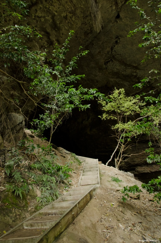 Leading up to the Oparara Arches