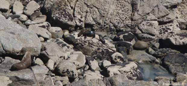 Tauranga Bay Seal Colony, West Coast, New Zealand
