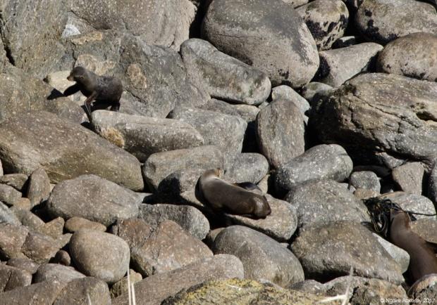 Tauranga Bay Seal Colony, West Coast, New Zealand