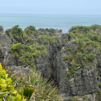 Seals and Pancake Rocks: Driving the West Coast of New Zealand