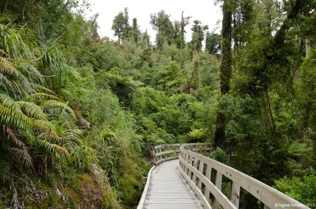Hokitika Gorge walkway