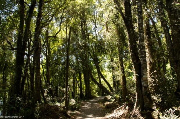 Rakaitane track - Lake Brunner