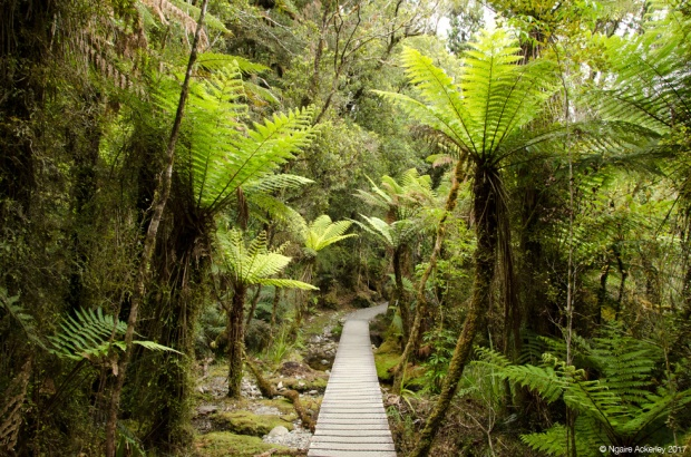 Walking trail around Lake Matheson