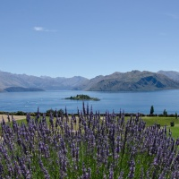 Sights of Wanaka - Lavender and Wine