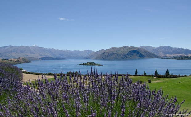 Views from Rippon, over Lake Wanaka
