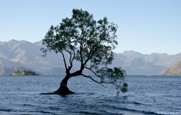Wanaka Tree (Lone Tree)