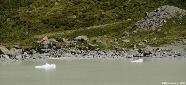 icebergs in Hooker Lake