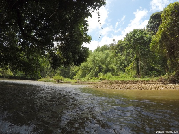 View from the boat in Mulu National Park