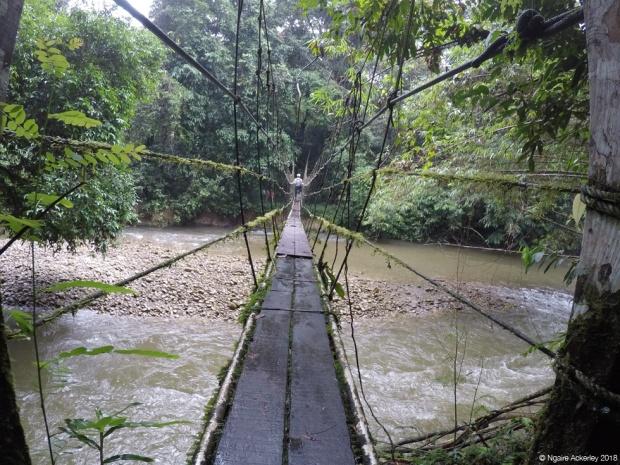 A wood/rope bridge in Mulu National Park