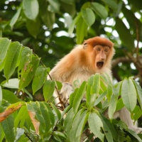 Kinabatangan River Wildlife Spotting, Borneo