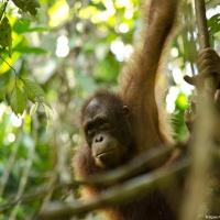 The Borneo Adventure Roundup
