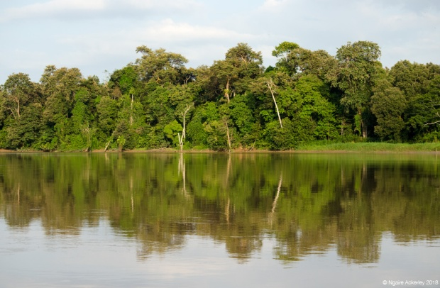 River reflections, Kinabatangan River, Borneo