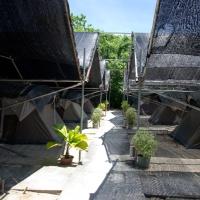 From Turtle Island Glamping, Borneo to the Batu Caves of Kuala Lumpur