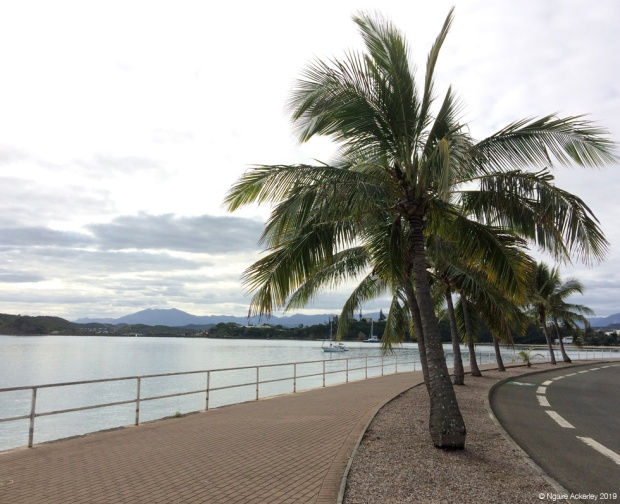 Boulevard with Palm trees in Noumea