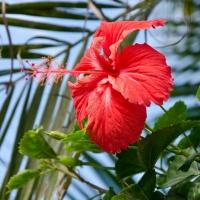 Nouméa: Colourful Peaceful Island Life
