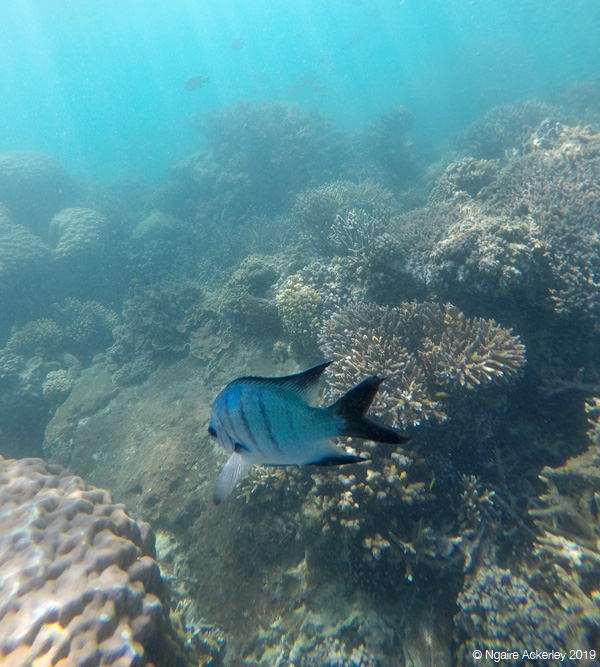 up close fish